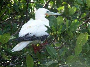 aves-4.jpg