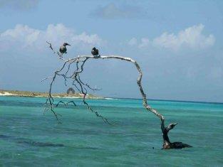 aves-6.jpg