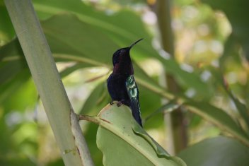 21-colibri.jpg