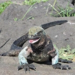 Bouteille à la mer – «Alter» (OVNI 435) aux Galapagos